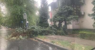 Fákat kicsavarva érkezett meg a vihar Békésbe