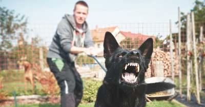 """""""Fogd meg, harapd meg"""" – Kutyáját uszította haragosára egy férfi Sárváron"""