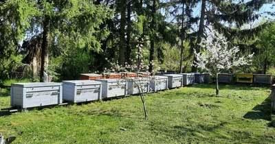 Lítiumsók segíthetnek a méhatka elleni küzdelemben?