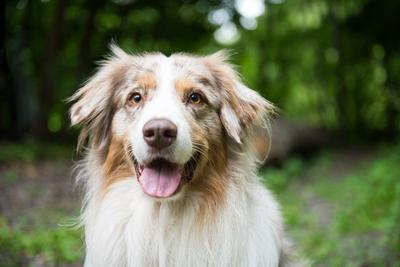Social kosár: Ki engedte ki a kutyát?