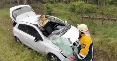 Fejérben már zajlik a szarvasbőgés – Így kerüljük el a baleseteket!