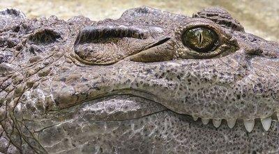 Rémisztő, mi került elő egy aligátor gyomrából – még a hatóság sokat látott emberei is ledöbbentek