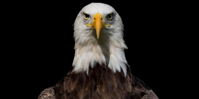 KVÍZ: Mennyit tudsz a madarakról?