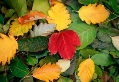Az ősz, és amit szeretünk benne