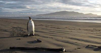 Gyerekek találtak rá a harminc millió éves óriáspingvinre
