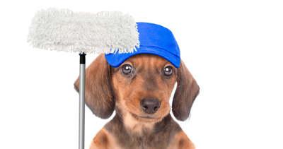 7 tipp, hogy szedd össze a lakásban a kutyaszőrt