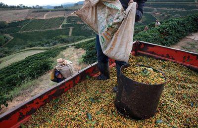 Ezekért az élelmiszerekért kell világszerte többet fizetnünk