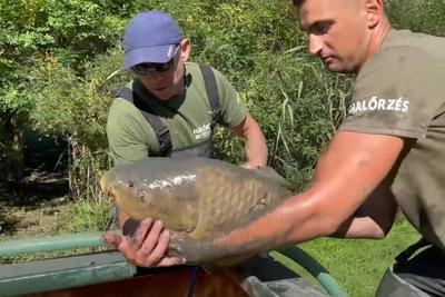 Többszáz, pusztulásra ítélt halat mentettek meg a Tisza-tónál