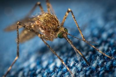 Megtalálhatták a szúnyogcsípés elleni tökéletes védelmet