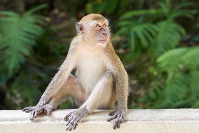 Egy vadon élő majom elrabolt, és fogságban tartott egy kölyökkutyát