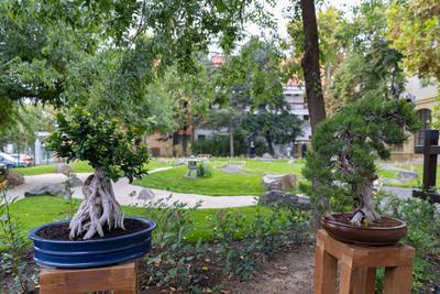 Mostantól japánkertje is van Gyulának
