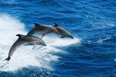 Delfines kaland Horvátországban