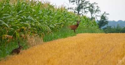 Szentes Kitti képe elnyerte az Agrofotó közönségdíját
