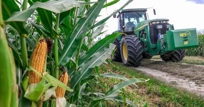 Jelentős hozamkiesés: a kukoricát büntette leginkább az időjárás