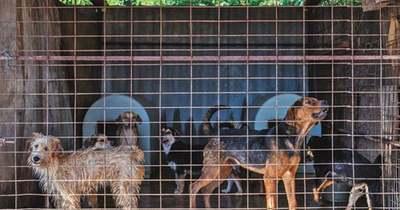 Újra a menhelyen – Kutyaposta