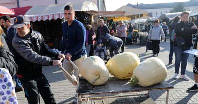 Gigantikus tökök feszültek egymásnak a piacon