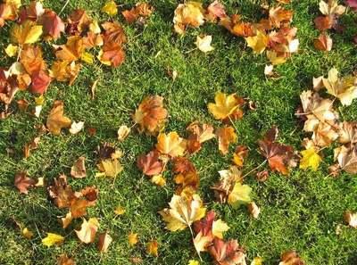 Mi történik a gyeppel, ha nem szeded le róla az őszi falevelet?