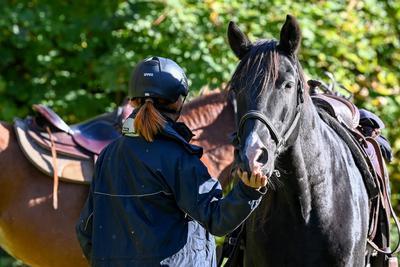 Ember a ló ellen