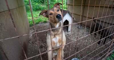 Tápot gyűjtenek a salgótarjáni állatvédő egyesület árván maradt kutyáinak