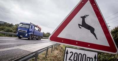 A vaddal való ütközés közlekedési baleset