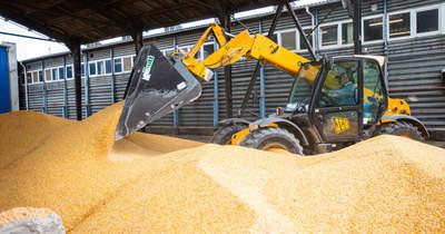 Többért veszik át a kukoricát Békésben, de egekben a műtrágya ára