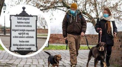 Kitört a kutyaháború a Vár környékén: volt kutya, amelyik gyerekre támadt
