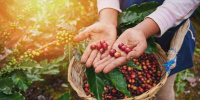 Melyik kávéfajta illik hozzád a legjobban?