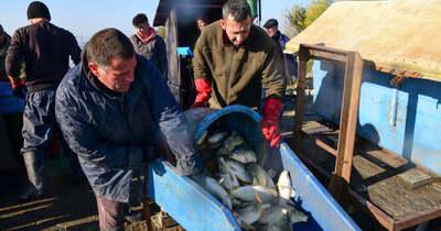 Látványos képeken a Fehértói halgazdaság lehalászása – Galéria
