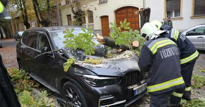 Gesztenyefa zúzta össze a méregdrága BMW-t Kaposváron