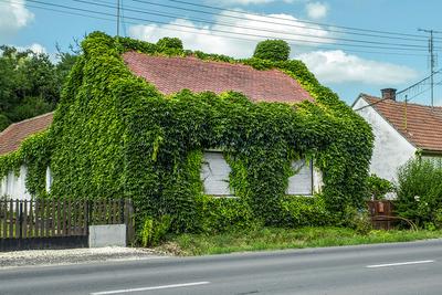 Nézegessen kerteket, zöldben burjánzó házakat egy fotókiállításon!