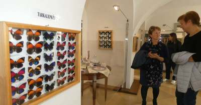 Lepke- és rovarkiállítás nyílt a porcelánmúzeumban
