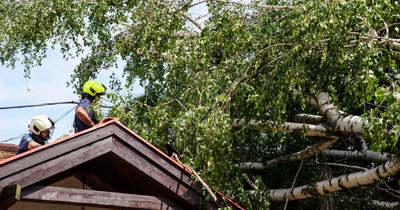 Fákat döntött ki a viharos szél Zalában
