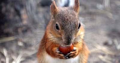 Szomorúak a mókusok – Nutella lesz a balatoni mogyoróból