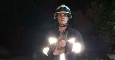 Kútba esett macskákat mentettek Adándon a tűzoltók