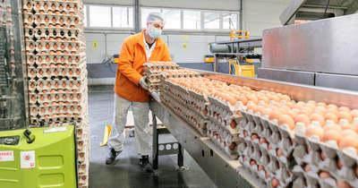 A költségeknél kisebb mértékben nőtt a tojás ára – de még így is örülhetnek a hazai termelők