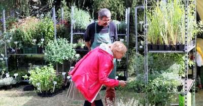 Drágább lesz a dísznövény, árat emelnek a kertészetek