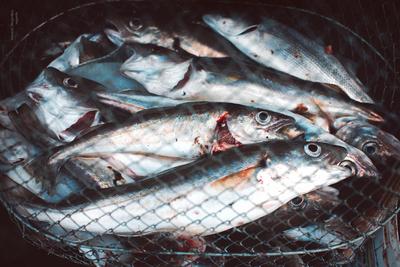 A briteknél már a tengeri halak feldolgozása is akadozhat