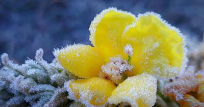 Mintha cukor lenne a virágokon: mínusz 3 fokos fagyra ébredt a Bakonyalja