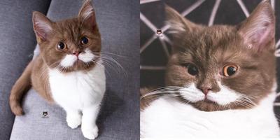 Ha ezeket a képeket meglátod, azonnal szeretnél egy kiscicát - Fotók a tündéri pofijú macskáról