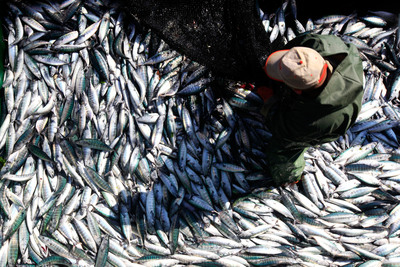 Három évtized alatt megduplázódhat a kék élelmiszerek fogyasztása