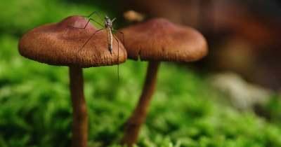 A dunaújvárosiak inkább gyönyörködnek a gombákban