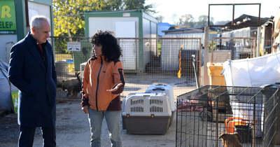 Pénzzel és nagyobb területtel segíti Kaposvár a kutyákat