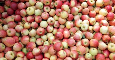 Támogatást kérnek a bajba került lengyel almatermelők