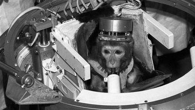 Meglepődnénk, mennyi állatot küldtek a történelem során az űrbe