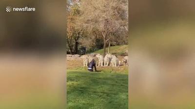 Bemászott a tigrisek közé egy őrült turista