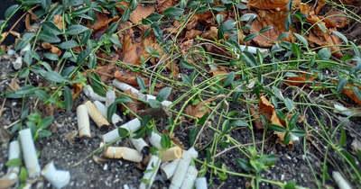 Értelmetlen szemetelés Nagykanizsán – virágládában nyomták el a csikket