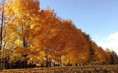 Még napokig tart a kellemes ősz