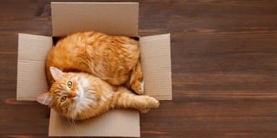 Költségek, amelyekkel számolnod kell, ha örökbe szeretnél fogadni egy cicát