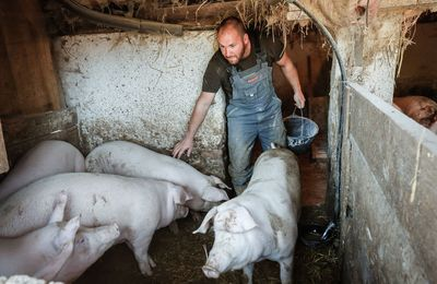 Elbukott a sertéságazat, a békeévek pedig véget értek az agráriumban