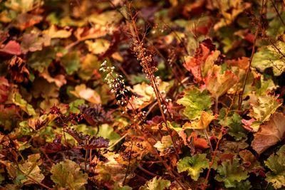 Már látni, mikorra érkezik az esős, borongós ősz